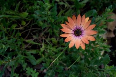 Discover the Skin Care Secrets of the Calendula Plant